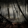 woodsVision003noMen