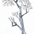Vector_tree01