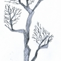 Vector_tree02