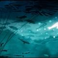 underwater003_2.JPG