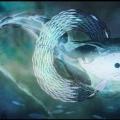 underwater006 copy.jpg