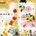 Taisce pollinators01l